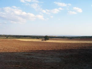 Campos de Puebla de Sancho Pérez II
