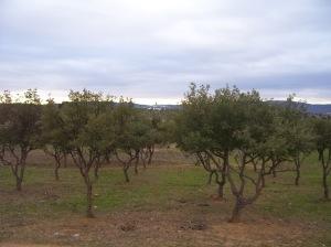 Vistas de Valdelagrulla desde Puebla de Sancho Pérez
