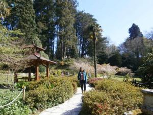 Paseando por el jardín japonés de Powerscourt