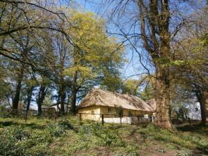 Típicas casas con techo de paja en Irlanda