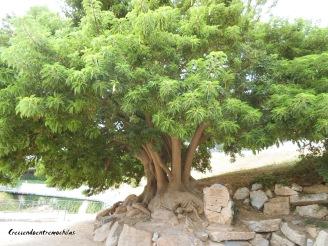 La felicidad es como un árbol
